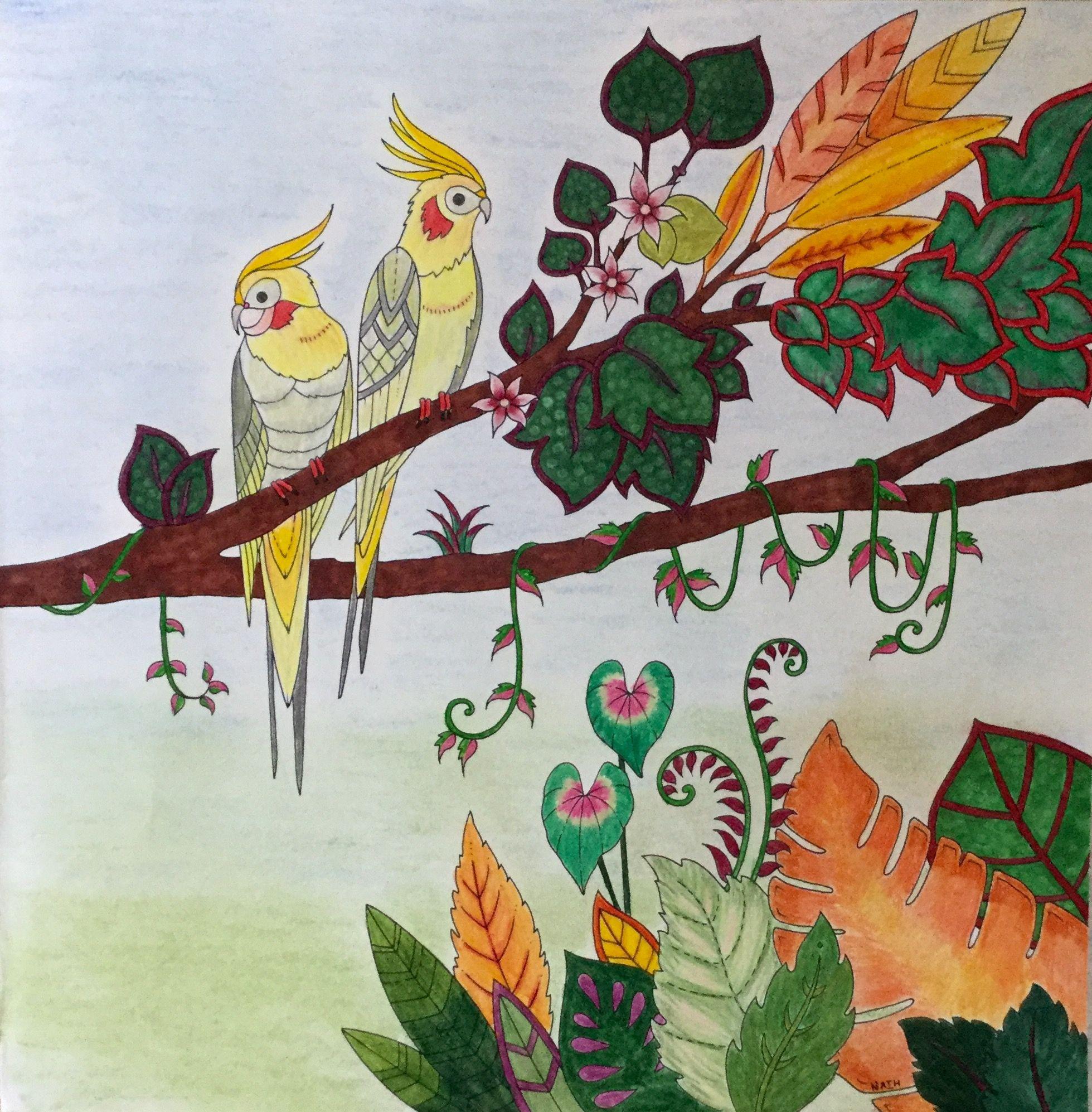 My coloring johanna basford magical jungle cockatiel calopsitte the magical jungle in 2018 - Dessin calopsitte ...