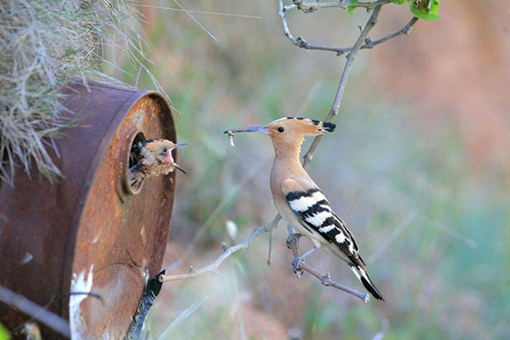 pájaros cuidando a sus crías
