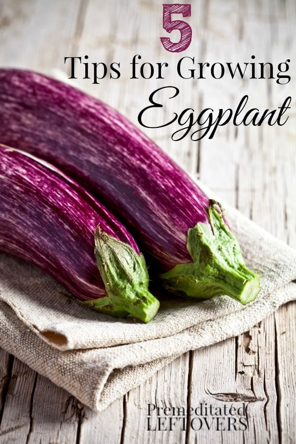 5 Tips For Growing Eggplant Including When To Harvest 400 x 300