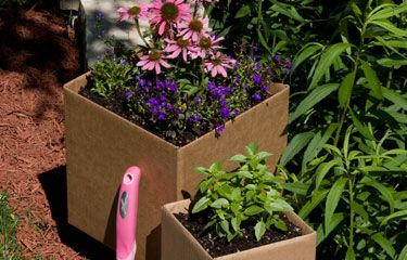 Gardening with boxes