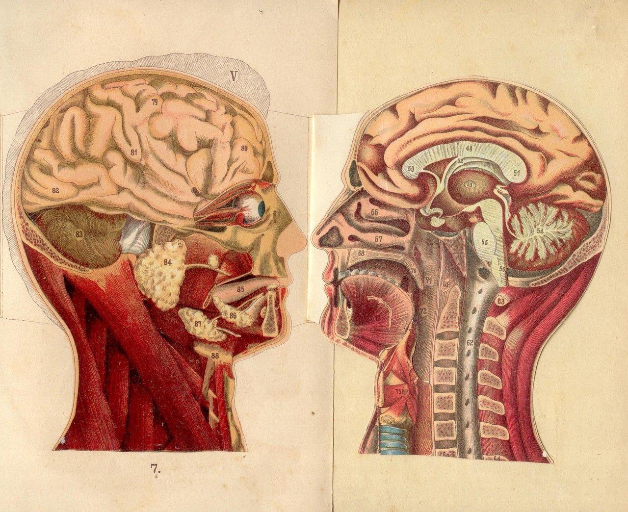 Anatomy medicaldiagram brain beautiful insides pinterest anatomy medicaldiagram brain ccuart Image collections