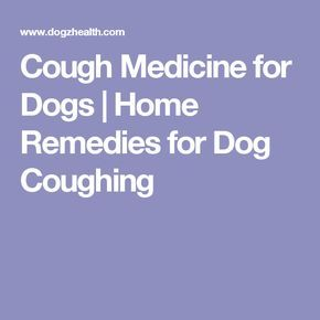 Cough Medicine for Dogs   Home Remedies for Dog Coughing