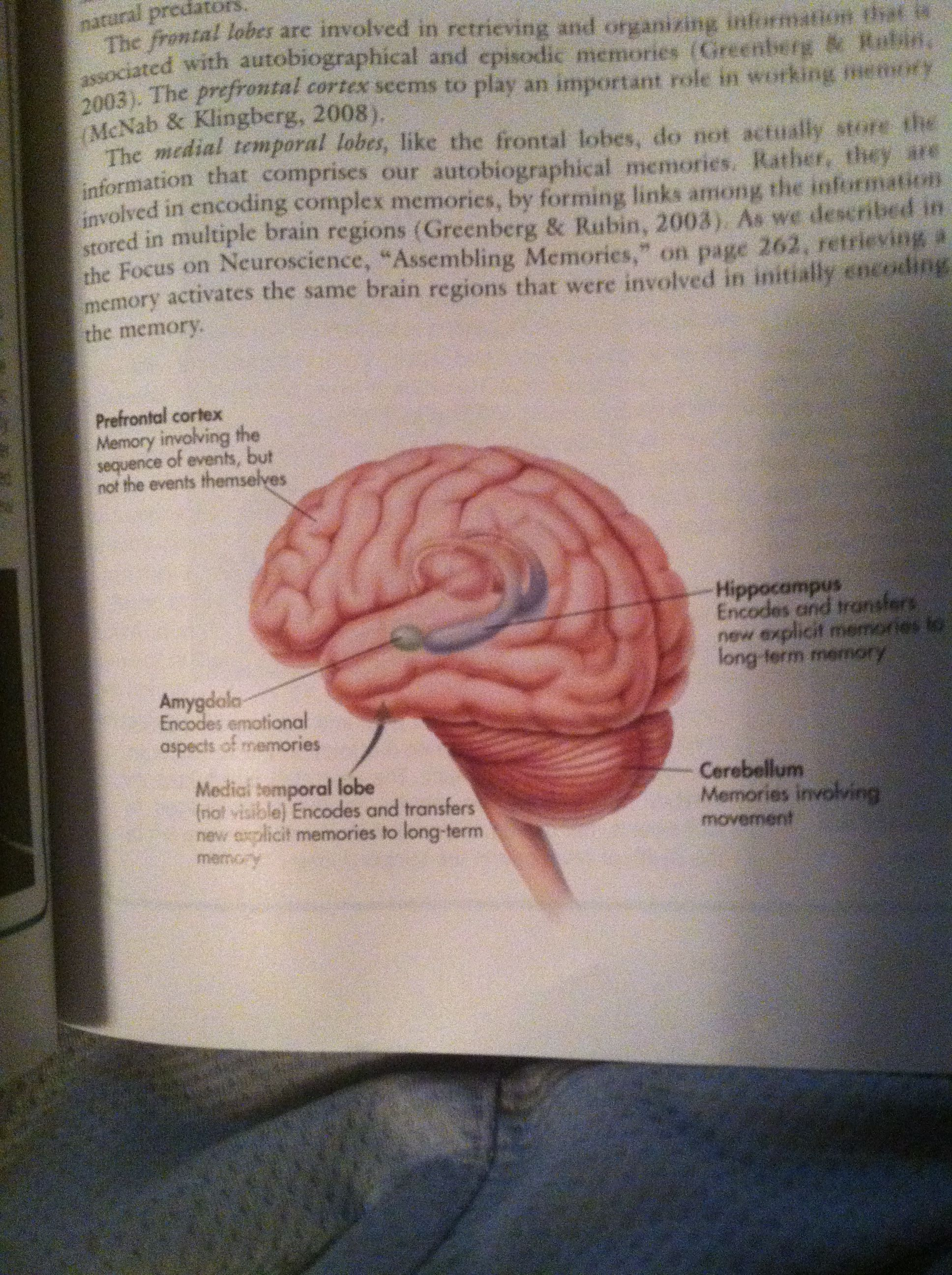 Love the brain! | Frontal lobe, Fhe, Book cover