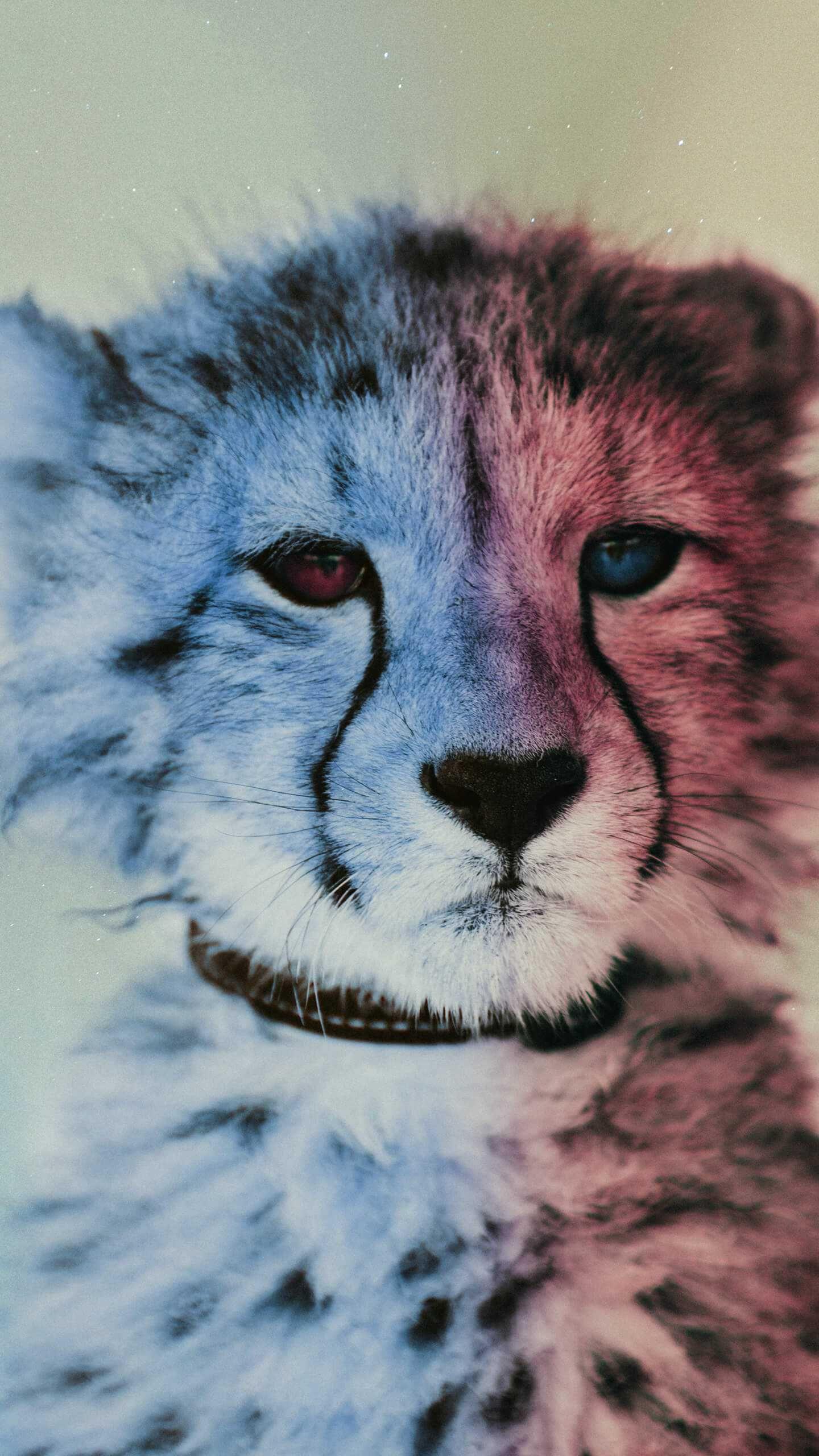 Baby Cheetah Iphone Wallpaper Animal Wallpaper Cheetah Wallpaper Snowman Wallpaper
