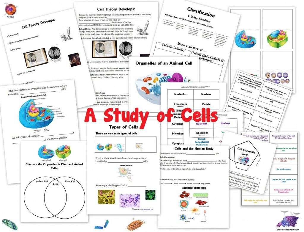 Cell Unit Worksheet Packet