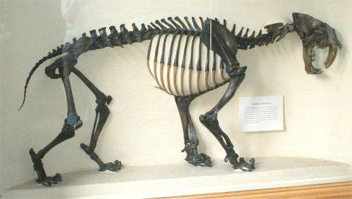 Prehistoric Planet Store - Replica fossils including dinosaurs ...