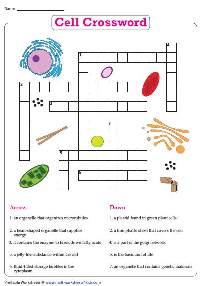 Cell Crossword Cells Worksheet Animal Cells Worksheet Plant And Animal Cells