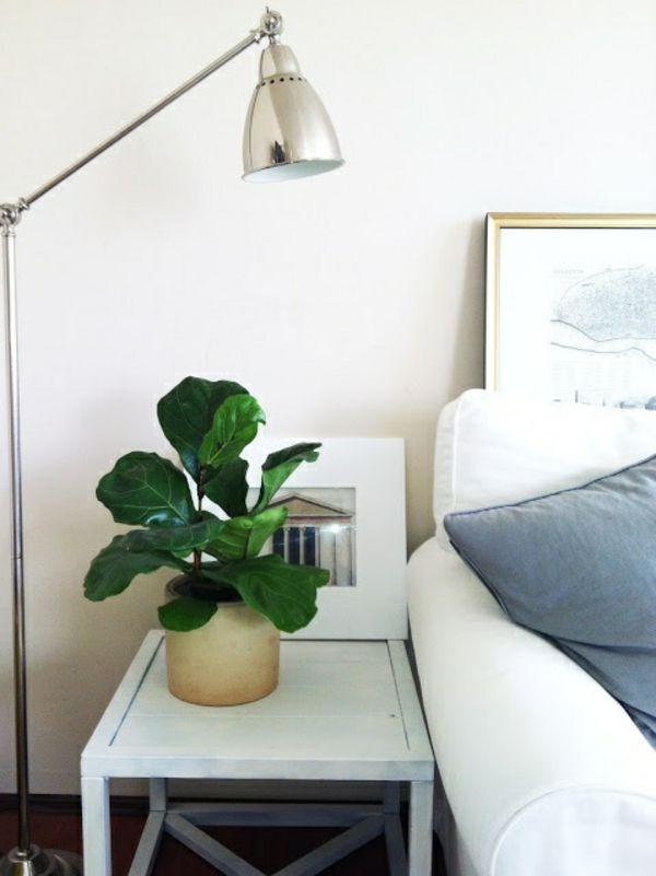 zimmerpflanze schattig feigenbaum zimmergrnpflanzen pflegeleicht - Wohnzimmer Pflanzen Schattig