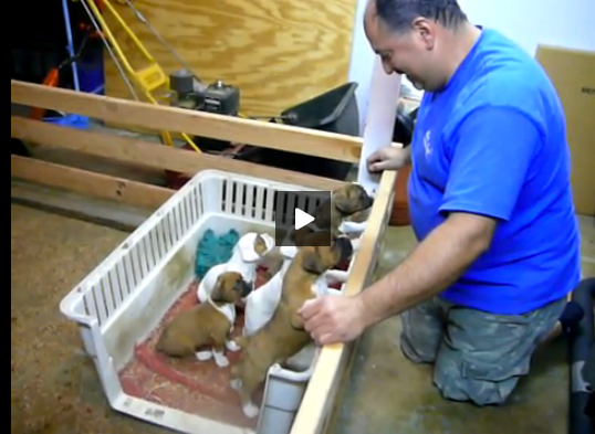 man sings puppies to sleep Really cute puppies, Puppies