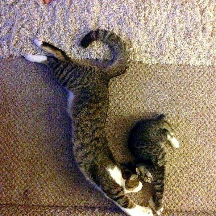 Cuties Cats