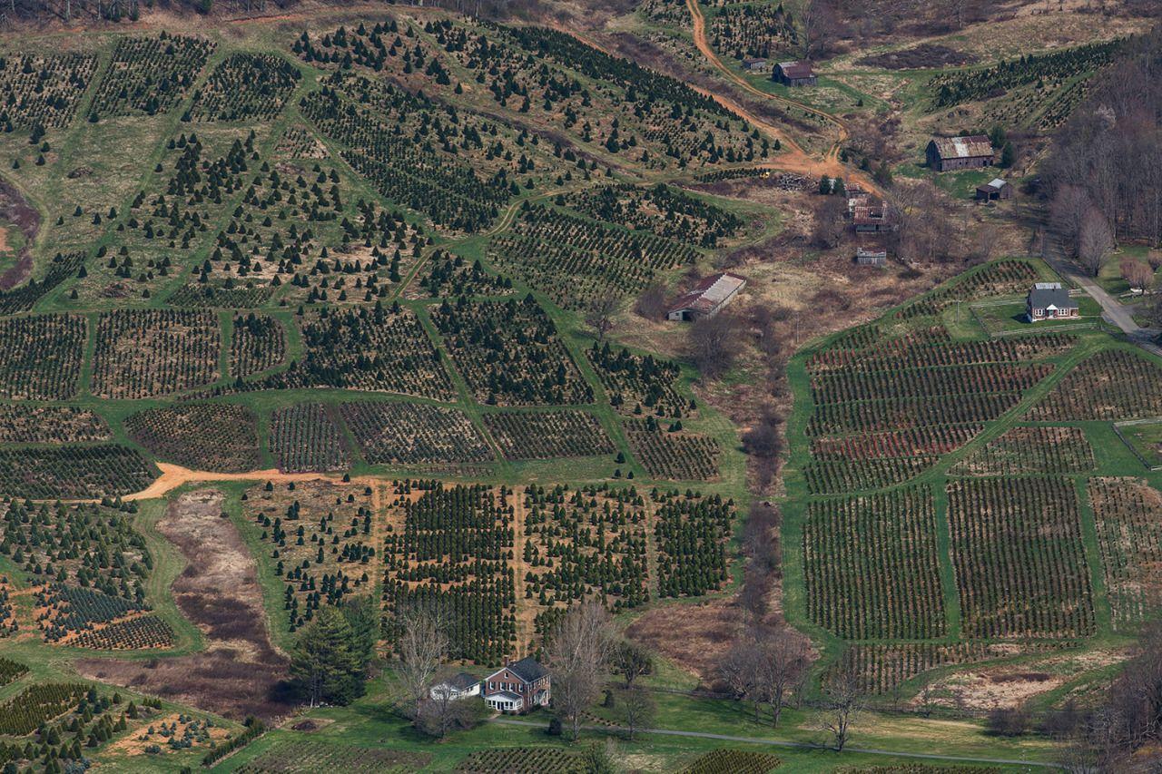 Kelly Culpepper. April 13 2014. Christmas tree farms near