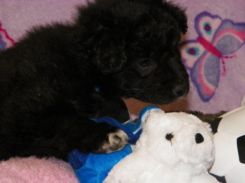 Adopt Noodle on Dog adoption, Pet adoption, Adoption