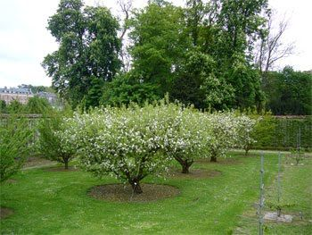 Sweet Life Garden: Backyard Orchard Culture   Orchard ...