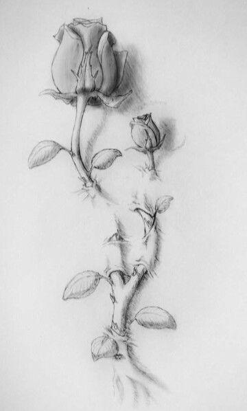 Dessin bouton de rose tatoo | Tatouage rose, Modele tatouage, Tatouage bouton de rose
