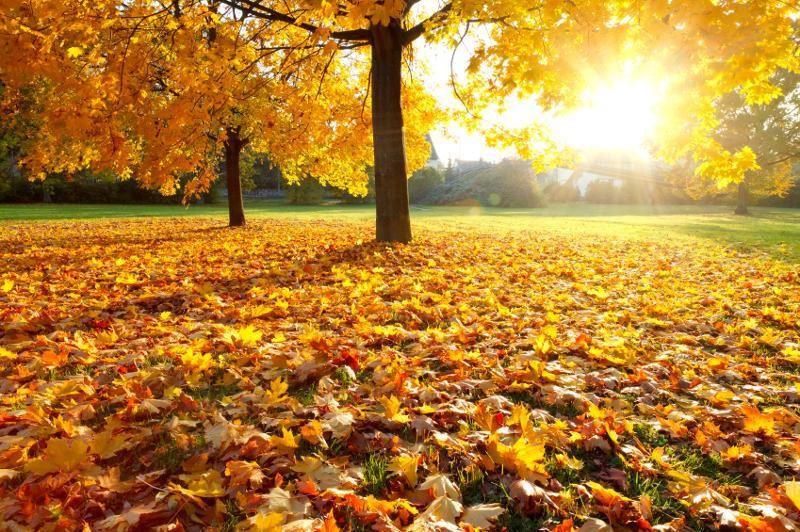 autunno luminoso