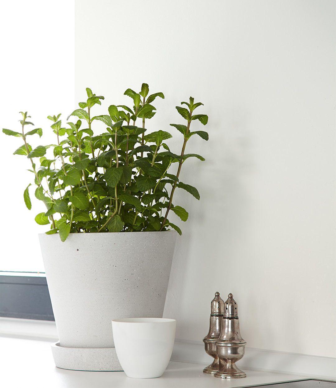 alpina feine farben no 04 zeit der eisblumen die w nde in zartgrau lassen wei e m bel. Black Bedroom Furniture Sets. Home Design Ideas