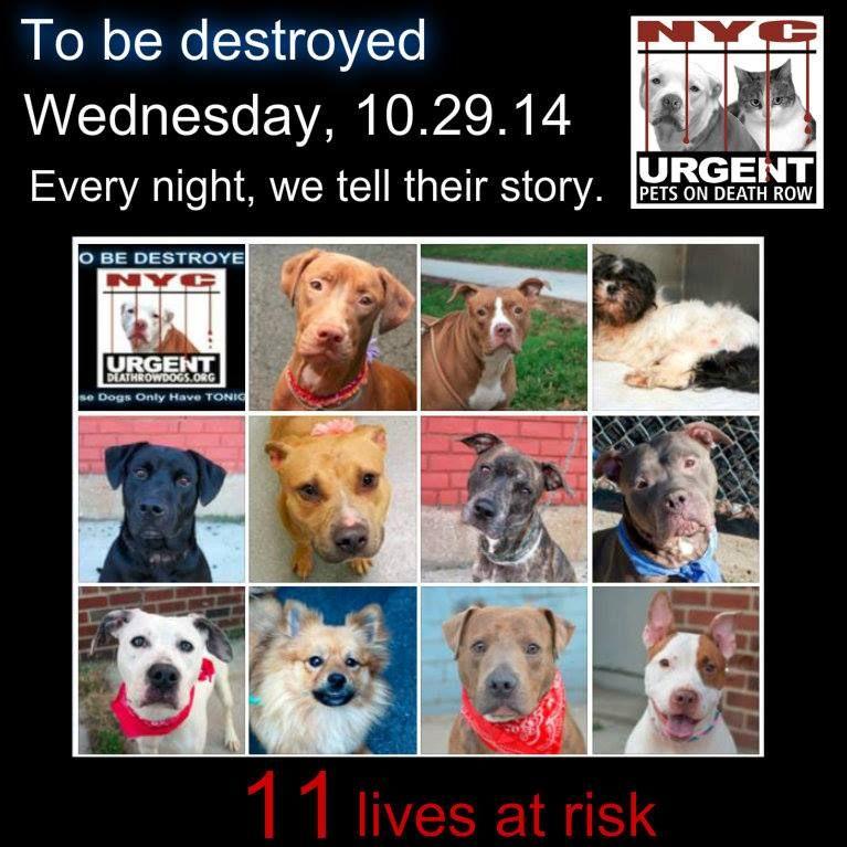 Rottweiler puppies lubbock texas