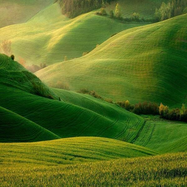 Green Hillside Fields, Torre a Castello, Italy.