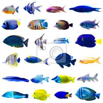 fotobehang tropische vissen set pixers 174 we leven om te