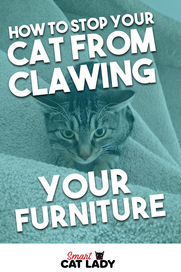 How To Stop Your Cat From Clawing From Furniture In 2020 Cats Cat Facts Kitten Care