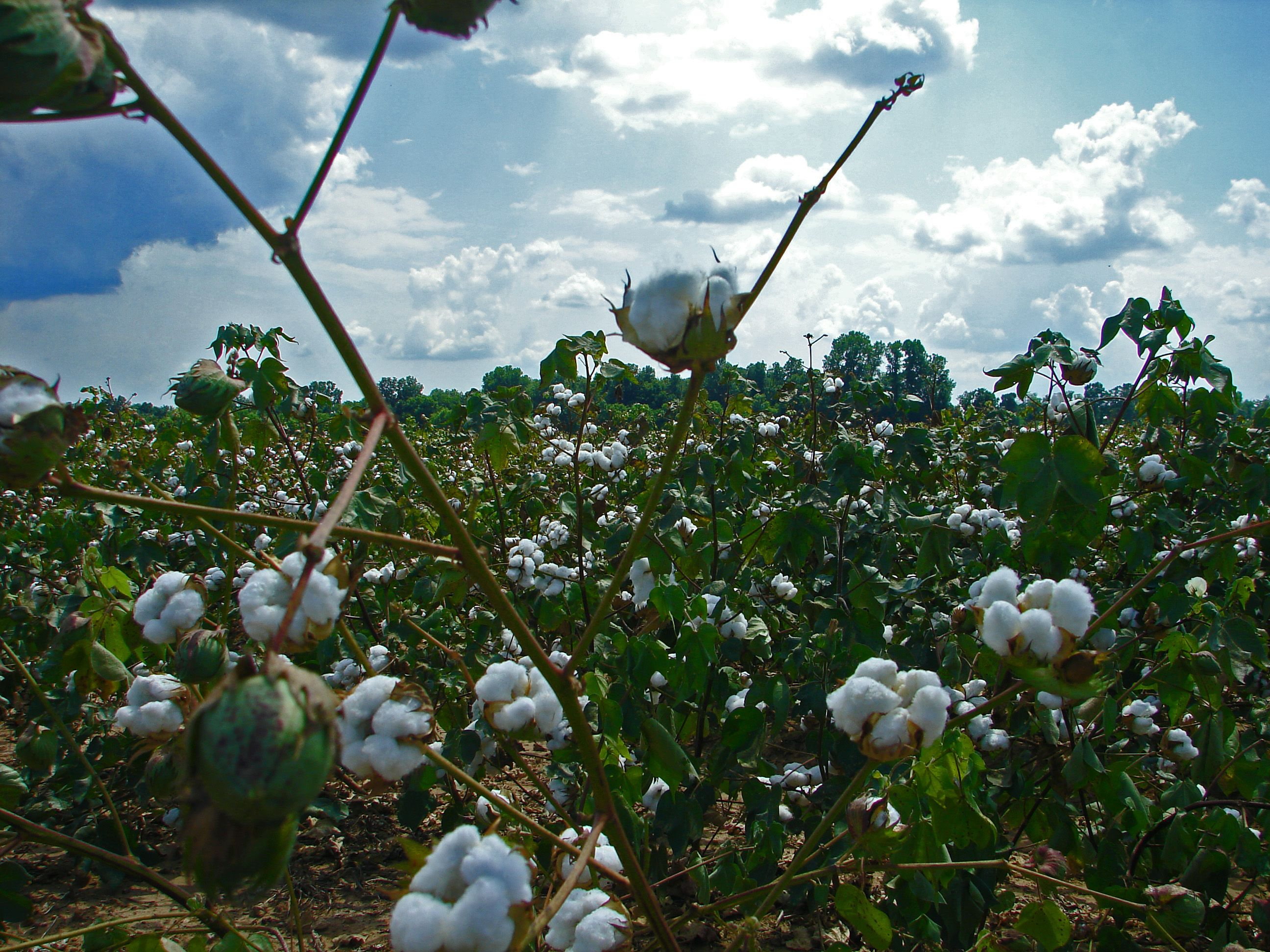 We Buy Community Trade Cotton From Craft Aid A Textiles Business