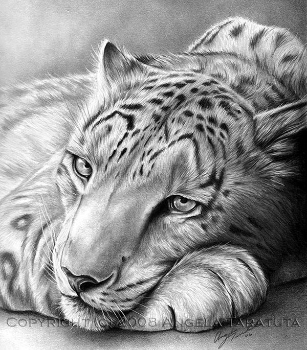 Realistic animal pencil drawings 27