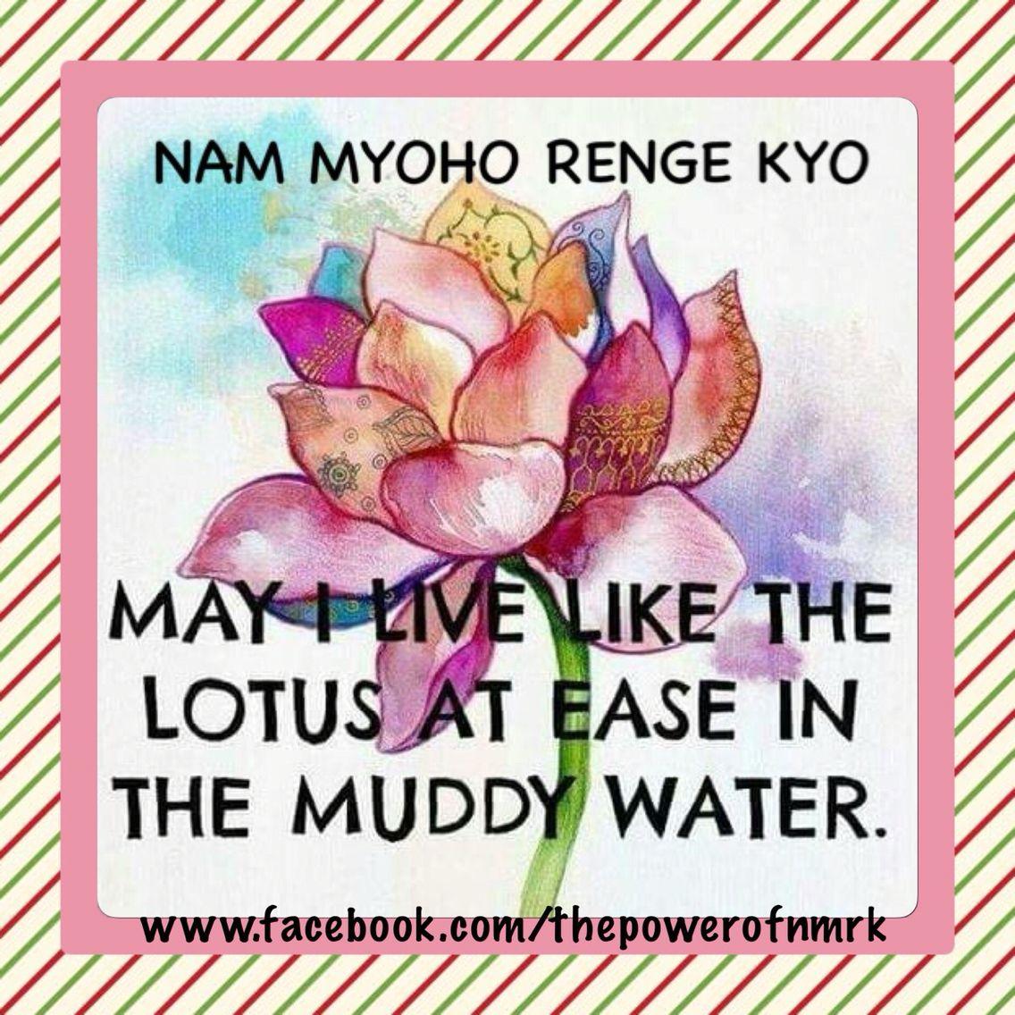 Lotus Flower Nichiren Daishonin Buddhism Pinterest Lotus