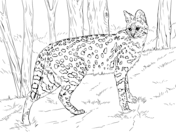 Wild cats coloring pages | Free Coloring Pages | Cat ...