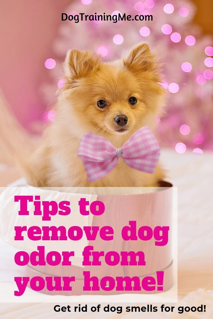 how to get rid of musty dog smell in house