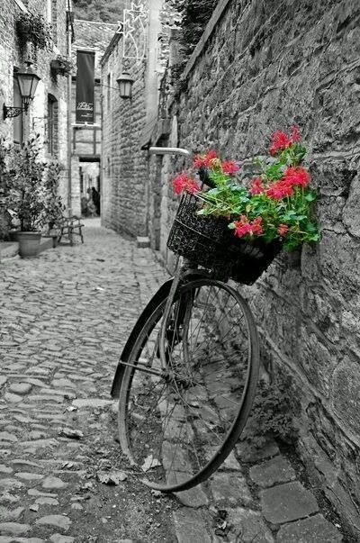 Black and white photography with a touch of color color splash bicycle basket with flowers