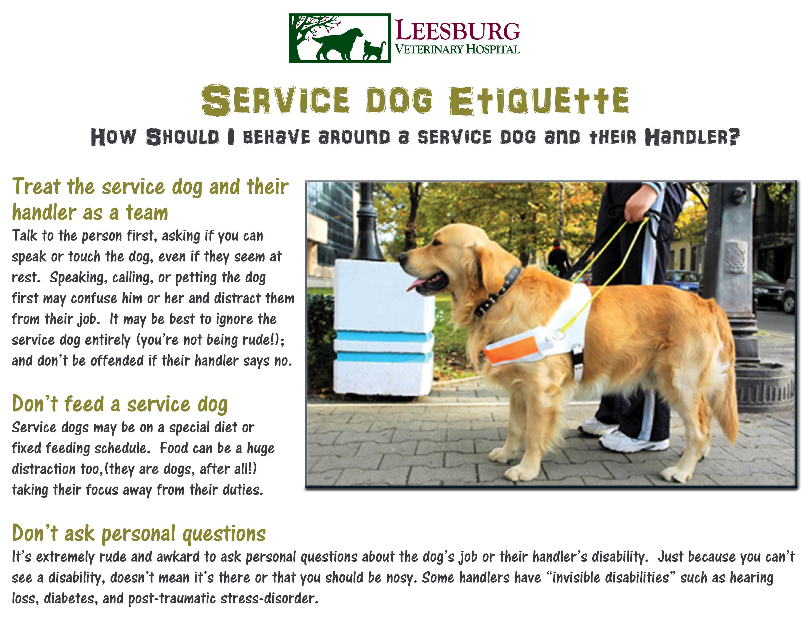 Service dog etiquette. Do you know how to act around a