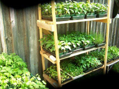 Backyard Nursery Plant Stand Plants Outdoor Indoor Gardening Garden
