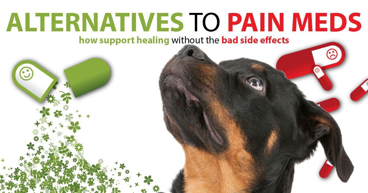 Pets First Veterinary Center Petsfirstvetctr On Pinterest