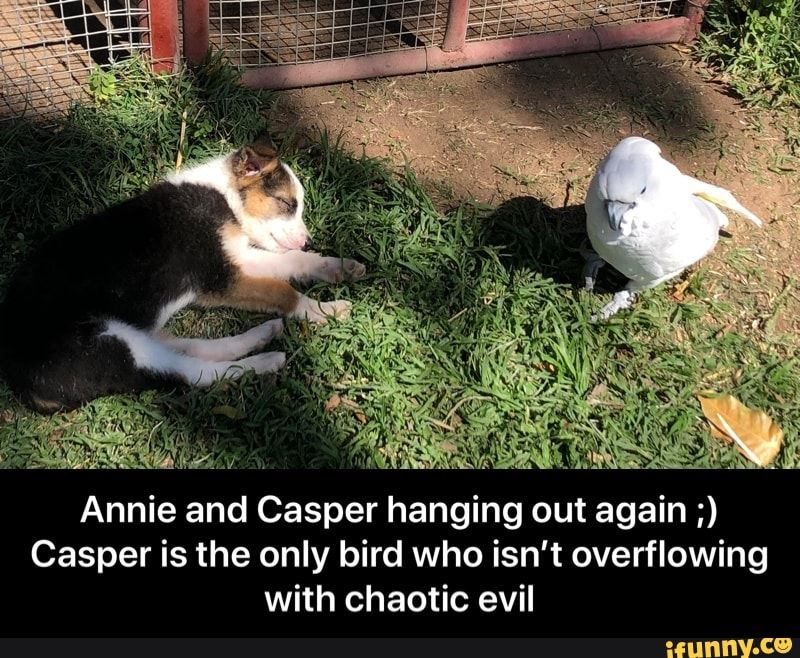 Meme memes 2ElVSmLx6: 3 comments — iFunny Annie and Casper hanging out again ;) Casper is the only bird who isn't overflowing with chaotic evil - Annie and Casper hanging out again ;) Casper is the only bird who isn't overflowing with chaotic evil  – popular memes on the site