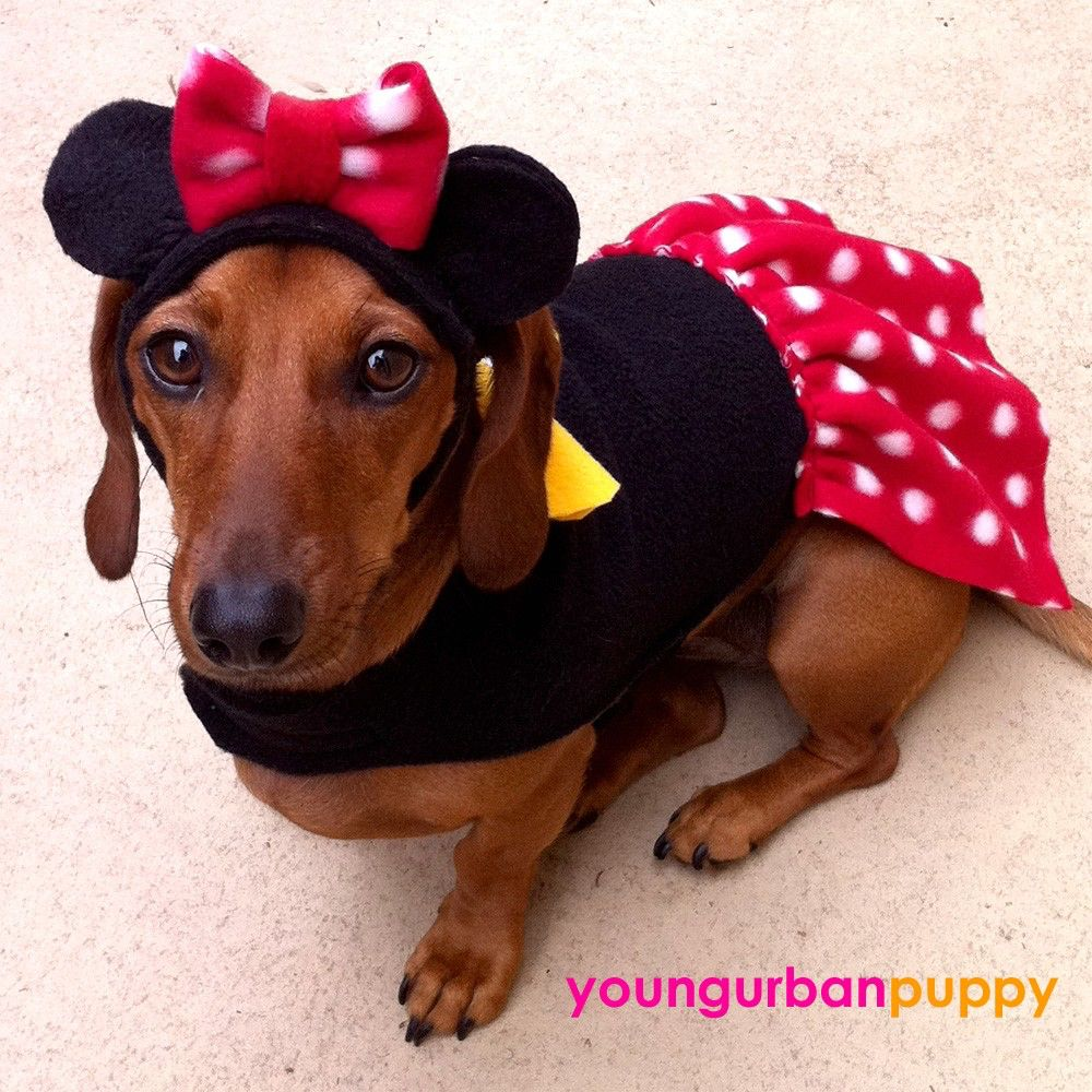 Minnie Mouse With Images Dog Halloween Costumes Dog Costumes