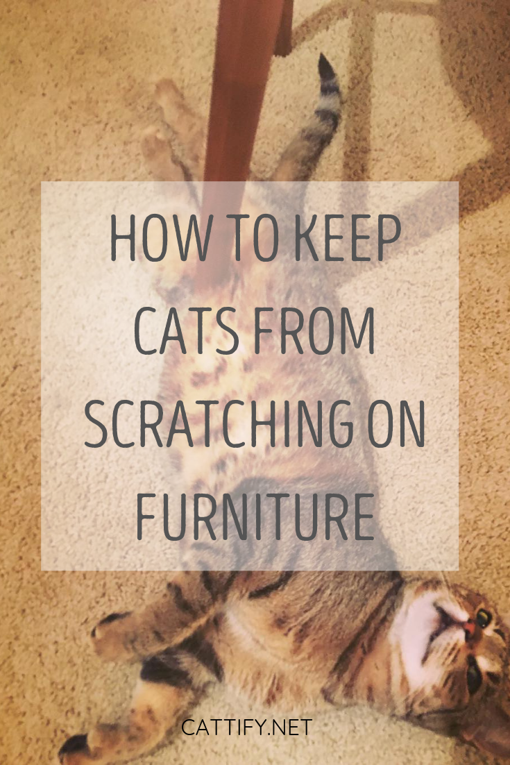 How To Keep Your Cat From Scratching On Furniture Cat Scratching Furniture Furniture Scratches Indoor Cat