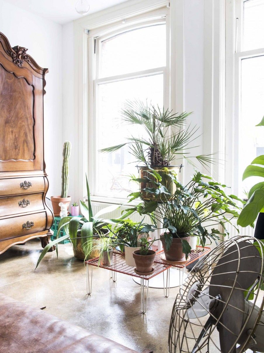 Planten in vintage woonkamer | Green plants in vintage living room ...