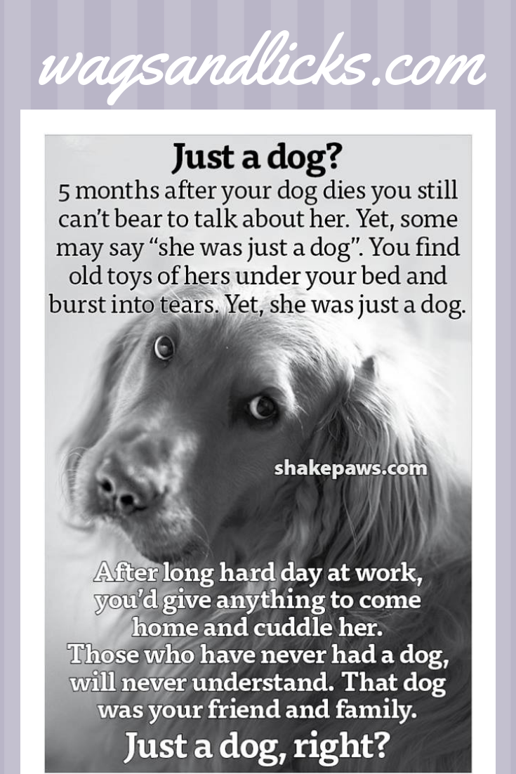 Pets In Heaven With Images Dog Grief Pet Grief Dog Quotes