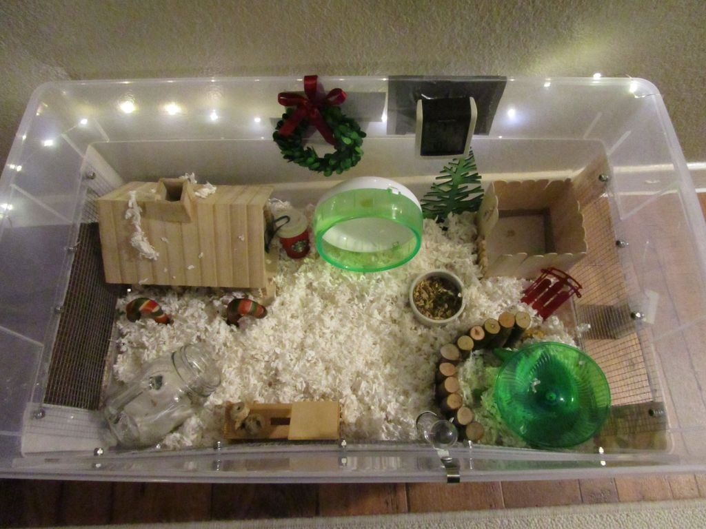 Proud Of Your Hamsters Cage Hamster Diy Cage Baby Hamster
