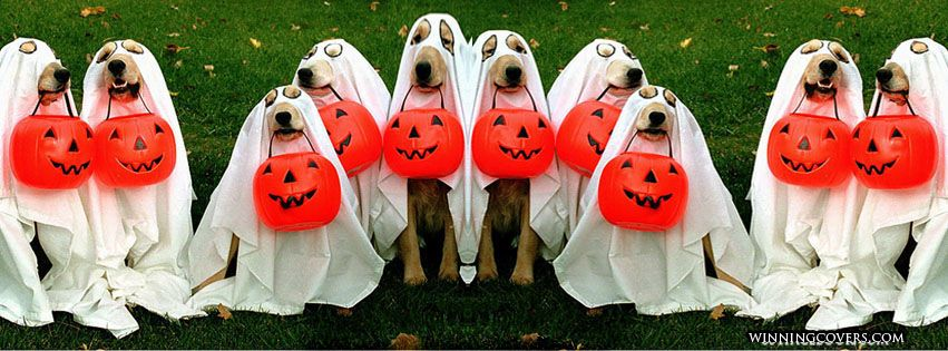 Funny Dogs In Costume Fur Babies Facebook Timeline Cover For