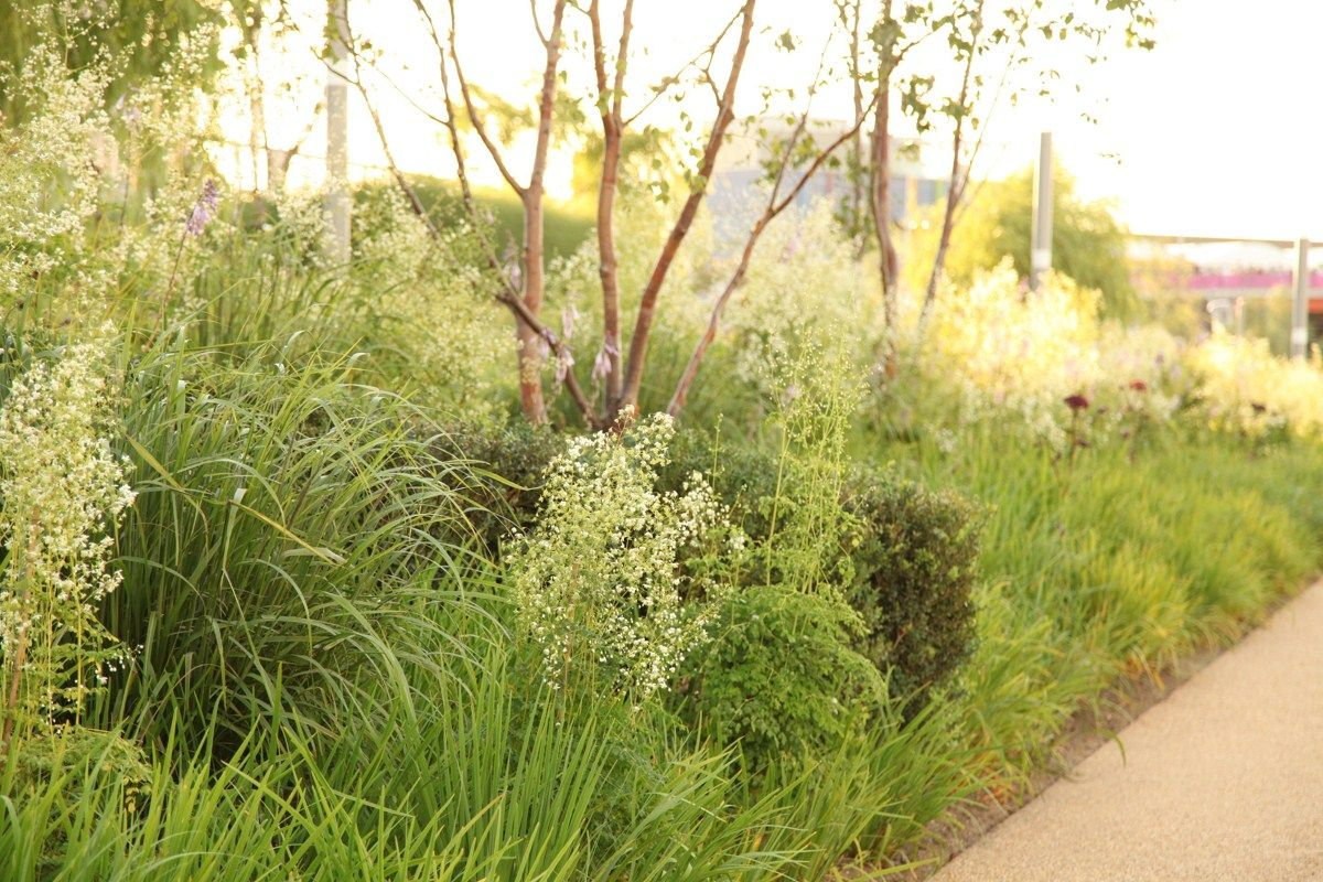 Sarah Price Landscapes Olympic Gardens Asia Olympic Garden Dry Garden Garden Landscape Design