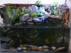 39++ Axolotl tanks info