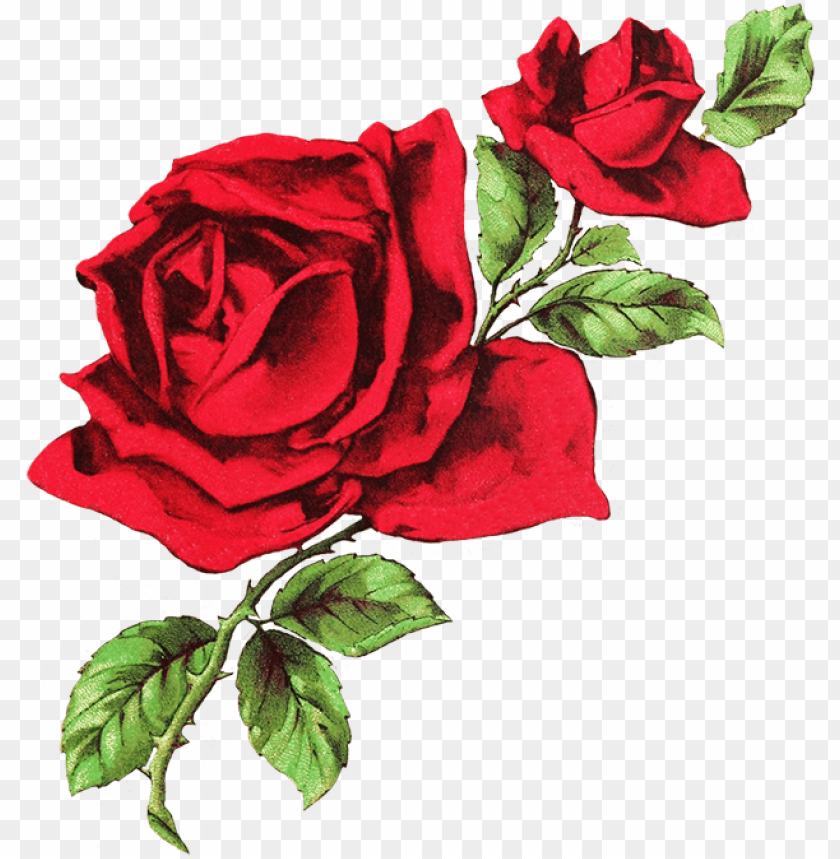Drawing Of Two Red Roses White And Red Aesthetic Header Png Image With Transparent Background Png Free Png Images Rose Drawing Flower Drawing Red Rose Drawing