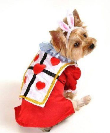 Pet Dog Cat Puppy The White Rabbit Alice In Wonderland Halloween