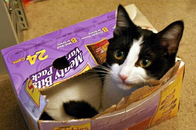 cute cat squeezes into a little box