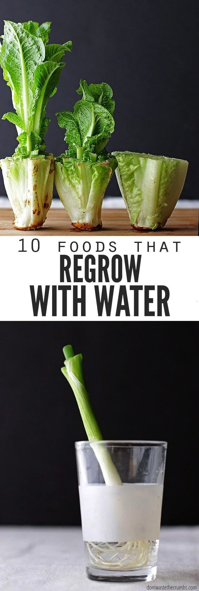 and regrow food scraps in water Perfect if you dont have room for a vegetable garden  are trying to save a few bucks But which veggies or fruit will regrow from scrap Wev...