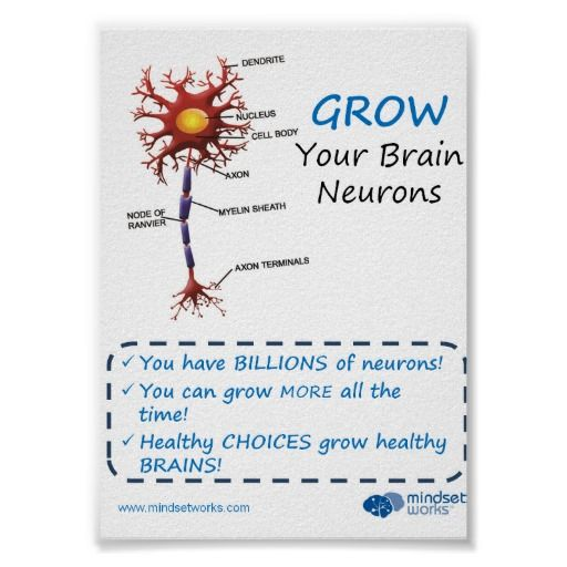 Grow Your Brain Neurons Brainology Poster | Brain topics ...