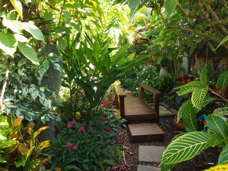 Tropical Garden Canopy Plants Google Search Tropical 400 x 300