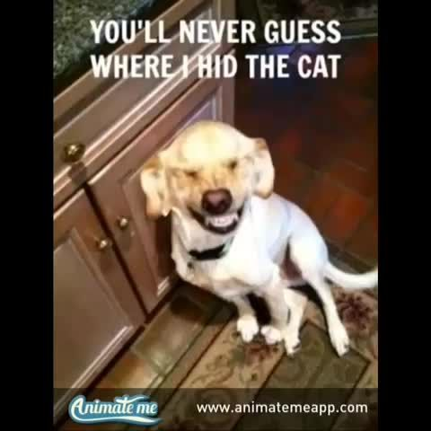 Funny Talking Dog Video Created With The Free App Animate Me