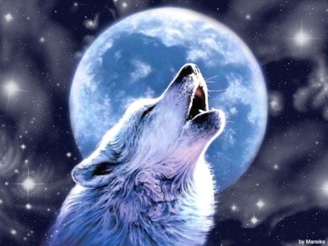 I got: Werewolf!!! Are you a vampyre or a werewolf?